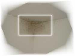 schimmel in wohnungen thiele immobilien rathenow. Black Bedroom Furniture Sets. Home Design Ideas